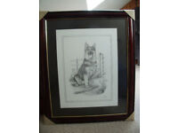Not displayed-C Varley signed framed black & white pencil print of sitting Alsatian, German Shepherd