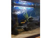 Malawi fishes