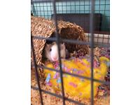 2 male rats and large cage.