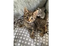 Cute chunky kittens ready to go