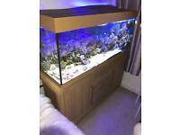 Juwel Rio 240 marine set up complete