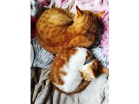 Two outdoor cats to be rehome for free