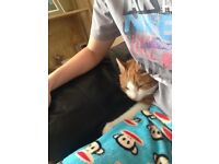 Ginger and white cat 2 years friendly cuddly and good with children, open to offers