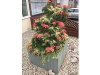 Large wooden planter 70cm high 100cm square.