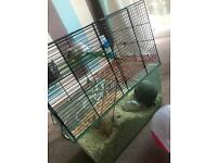 2 gerbils come with cage