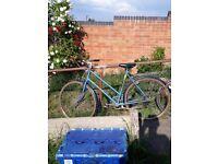 female raleigh bike mens bike