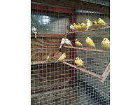 cararies for sale