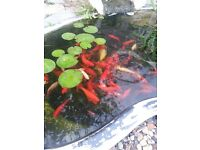 fish pond and filter