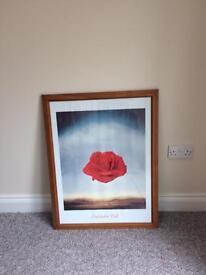Salvador Dali medative rose framed print