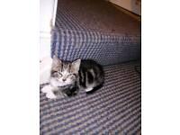 Boy kitten