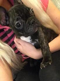 1 beautiful female French Bulldog puppy for sale (still for sale due to time wasters)