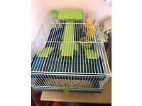 Dwarf male hamster with cage, bedding and food