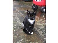 Black kitten, 4 months old