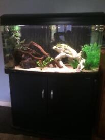 Aqua one 980 bow front fish tank and stand, complete setup.