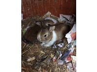 2 baby rabbits