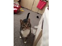 Cat for ungent rehome asap for free