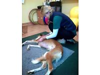 Canine Physiotherapist in Swindon