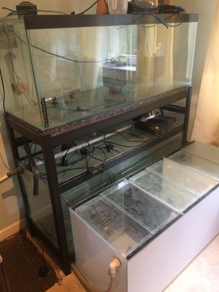 For sale 3 4ft fish tanks one is divided into 3 cubes | in ...