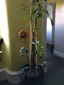 Umbrella plant indoors