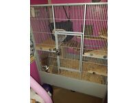Chinchillas mother and daughter cage and all accessories