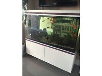 Full aquarium set up for sale