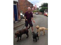 Walk This Wayne - Dog Walking & Pet Sitting in Derby