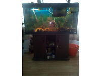 200l fish tank with stand, cover and lots of accessories! Can negotiate or deliver