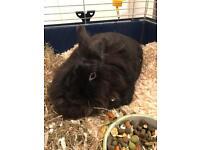 Frieda the Rabbit desperately needs a new home!