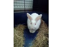 Cute 4 months snow white bunny! Cage,food and other bits included!