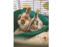 Rabbit Boarding Service - Midlands, UK - * Bunny Hotel *