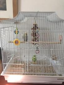 Budgie and gage