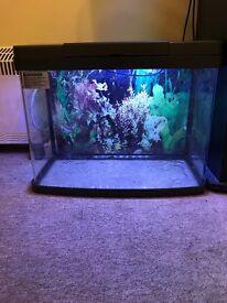 Love fish Panorama 40