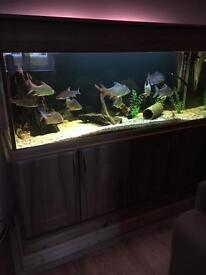 Five foot aquarium with everything imaginable and fish