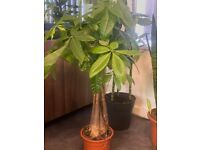 mixed selection of indoor plants top quality