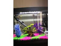 Tropical fish plus tank & accessories