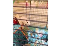 Two pretty tame gerbils plus cage (approx 6 mos old)