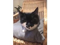 Nala missing! 1 year old female cat from Clapton, Hackney.