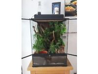 Bio-active Exo Terra with male crested gecko.
