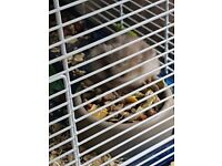 2 male hamsters and 2 cages