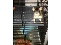 Two rats to be given to a good home. Includes cage, hammock, water bottle, food holder and chew toys