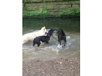 Nic's dog walking- dog walking/ pet sitting/ pet visiting- reasonable rates