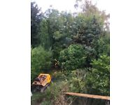 Landscaping, ground clearance, tree felling service in Nottingham