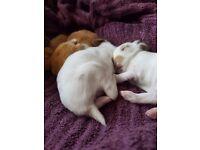 Bunnies english spots