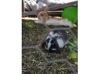 Pet rabbits for sale.