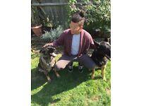 Professional Dog walker/Pet sitter