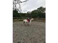 11.2 lead rein pony