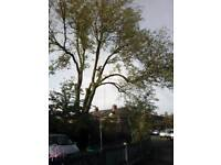 Tree work hedges