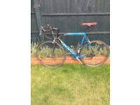 Avanti Corsa Pro Series Road Bike (Australian) 57cm. Shimano gear set and Cateye Strada included