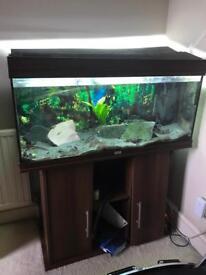3.5 ftFluval Fishtank and cabinet