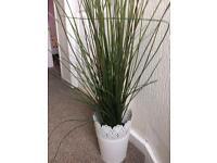 House clearance ikea plants worth £40